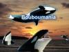 bouboumania - joueur Oceanzer