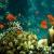 La mer de corail
