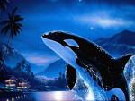Orque Orque - Orque Femelle (0 mois)
