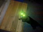 Chat my cat buck - Mâle (10 ans)