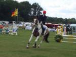 Paint Horse - Cheval Mâle