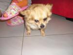 Pongo - Chien Mâle (8 ans)