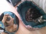 Susi und Rocky -