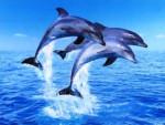Des dauphins -